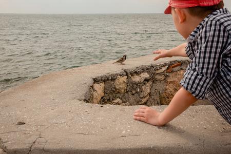 The boy feeds sparrows on the sea coast