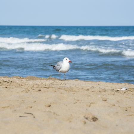 ebro: Seagull on the coast of Mediterranean sea, Sant Carles de la Rapita