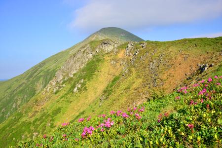 Summer landscape in the Ukrainian Carpathian mountains. View on the Mount Hoverla