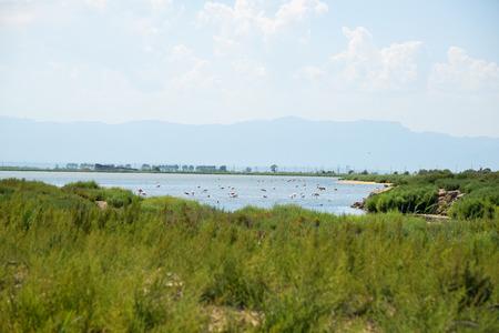 Flamingos in the Ebro Delta Natural Park, Catalonia Stock Photo