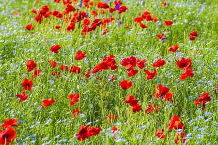 Beautiful bright flowering field