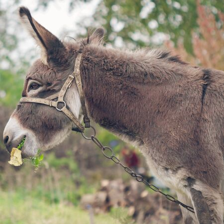 Donkey portrait. Autumn in the village