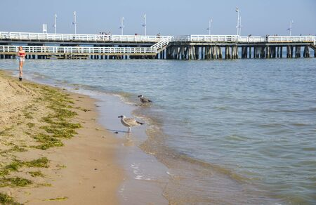 Seagulls on the beach of Baltic Sea in Sopot. Sopot, Eastern Pomerania in northern Poland Stock Photo