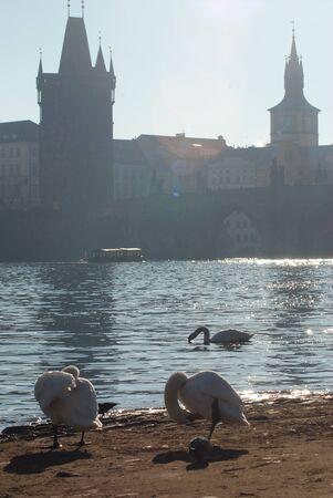 Early morning on the Vltava River. Prague, Czech Republic Imagens
