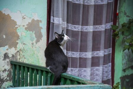 Cat on a fence in the street in Odessa, Ukraine