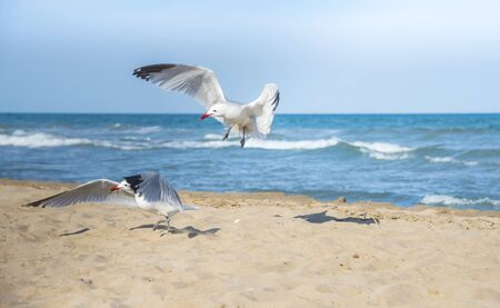Seagulls on the beach of Mediterranean sea, Spain Banque d'images