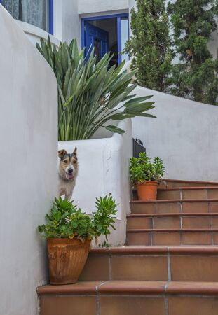 Cute dog jack russel terrier on the steps near house