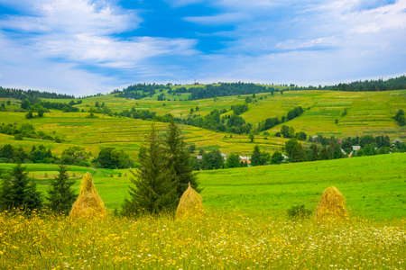 Haystacks on the grassland hill in summer, foreground. Traditional carpathian rural landscape in mountains.