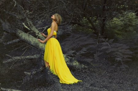Photo of young beautiful lady in fairy forest photo