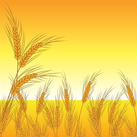 wheat vector Stock Vector - 12854935