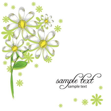 chamomile flower: vector background of daisies
