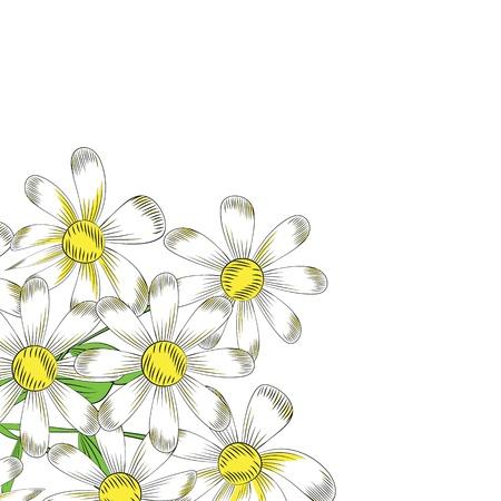 chamomile flowers on a white background Illustration
