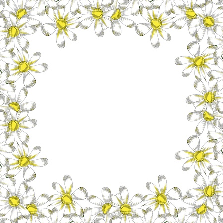chamomile flowers on a white background Stock Vector - 13233310