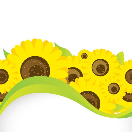 sunflower field: Background with sunflowers Illustration