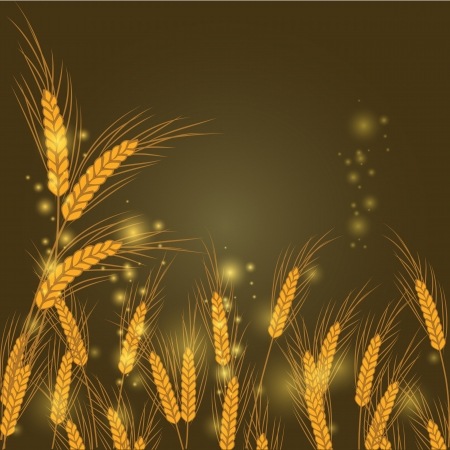 vector illustration of wheat in a field at night Vector