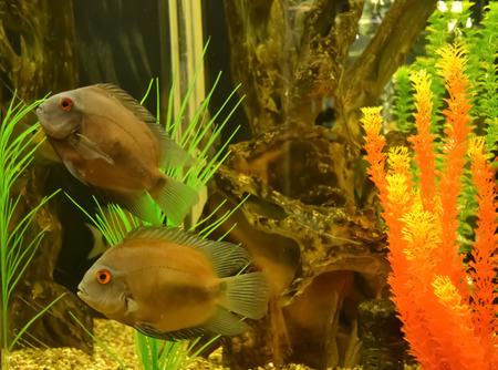 aquaria: fishes in aquarium with decoration