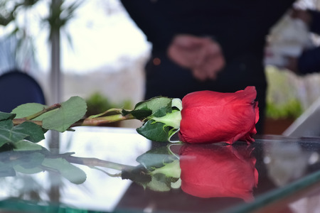 table surface: rose on table makes reflection on surface with hands background