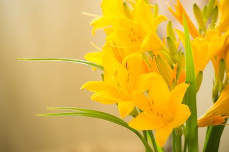 fleurs romantique: lis jaunes - fleurs romantiques