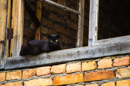 implacable: chat noir assis sur ch�ssis de fen�tre en bois