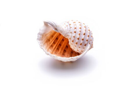 Sea natural shell, original pattern of marine life. Safety Shelter for mollusks and crustaceans white isolate. Imagens