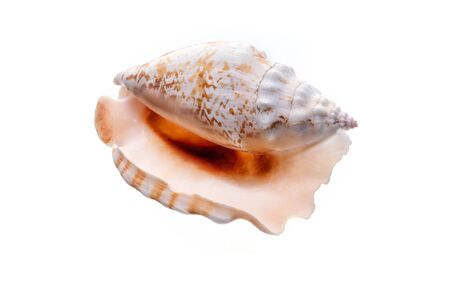 Sea natural shell, original pattern of marine life. Safety Shelter for mollusks and crustaceans white isolate. Stock Photo