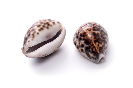 Sea natural shell, original pattern of marine life. Safety Shelter for mollusks and crustaceans white isolate.