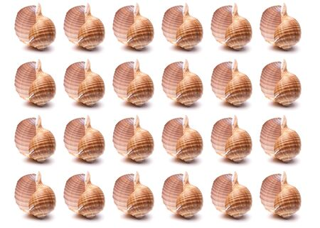 Pattern Sea natural shell, original pattern of marine life. Safety Shelter for mollusks and crustaceans white isolate.