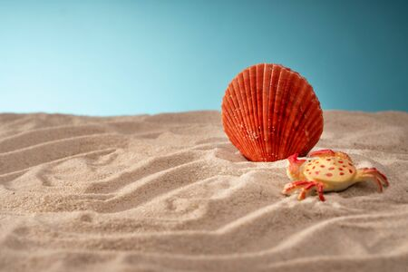 Seascape seashells sand, holiday postcard. Sea animals. Place for text.