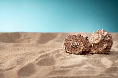 Seashell in the sand, a shelter for mollusks.