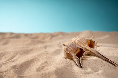 Seashell in the sand, a shelter for mollusks. Travel card, blue Zdjęcie Seryjne - 130954553