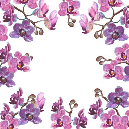 Waterverf orchidee takken geïsoleerd op een witte achtergrond Stockfoto - 76173979