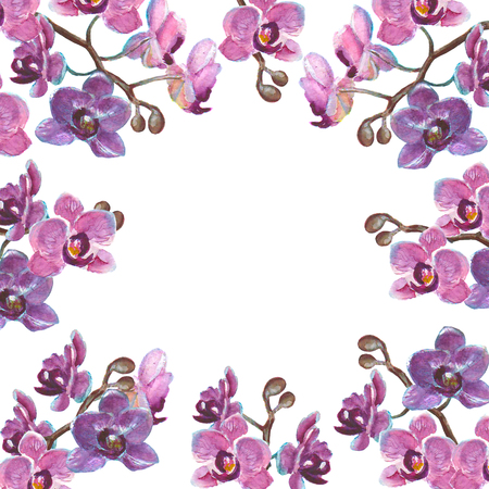 Waterverf orchidee takken geïsoleerd op een witte achtergrond