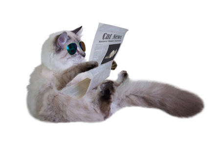 Funny cat is sitting and reading a newspaper in sunglasses. Side view. Isolated on white background.
