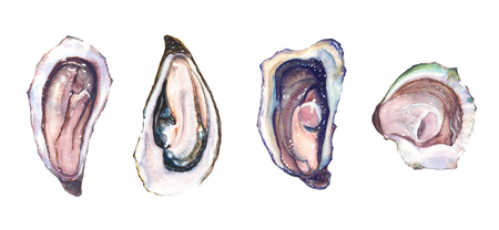 Set of four watercolour hand drawn different oysters isolated on white background.