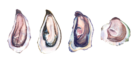 Set of four watercolor hand drawn different oysters isolated on white background.