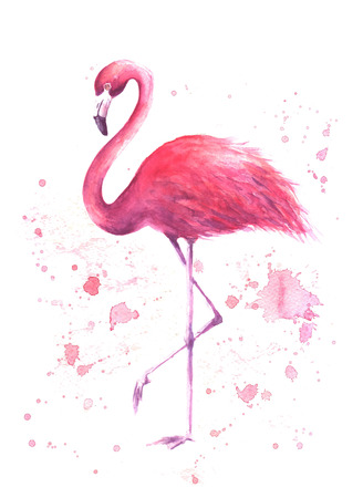 Pink flamingo. Tropical exotic bird rose flamingo with watercolor splashes on white background. Watercolor hand drawn illustration. Print for wrapping, wallpaper, cards, textile.