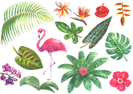 Set of tropical exotic plants and pink flamingo isolated on white background. Watercolor hand drawn botanical illustration. Aechmea Bird of paradise Orchid Frangipani Anthurium, Heliconia Hibiscus