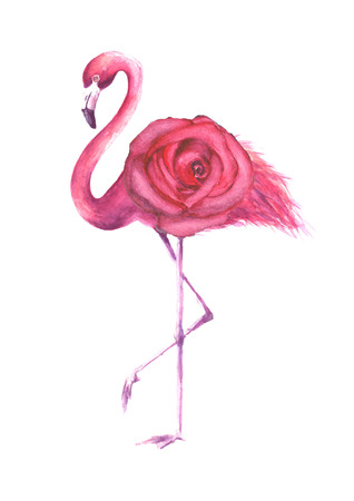 Tropical exotic bird pink flamingo with pink rose isolated on white background. Watercolor hand drawn natural botanical classic illustration for wedding invitations, greeting cards.