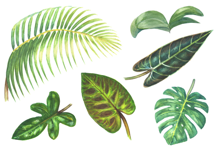 Set of bright tropical exotic plants isolated on white background. Watercolor hand drawn botanical illustration. Phalaenopsis Orchid, Palm, Monstera, Philodendron.