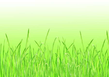Green grass. Summer horizontal background with watercolor hand drawn bright green fresh grass. Watercolour eco design herbal background with gradient. Stock Photo