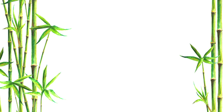 Bamboo spa background. Watercolor hand drawn green botanical illustration with space for text. Watercolour bamboos plants isolated on white horizontal background. Chinese oriental border frame design.