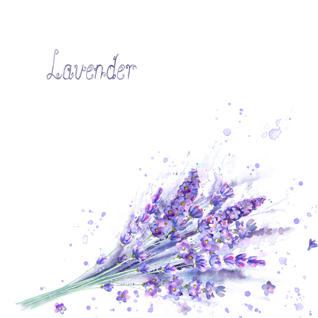 Watercolor lavender bouquet. Lavender flowers, plants, watercolour splashes and lettering on white background. Purple green hand drawn botanical illustration. For invitation, wedding, greeting cards. Banco de Imagens - 121817410