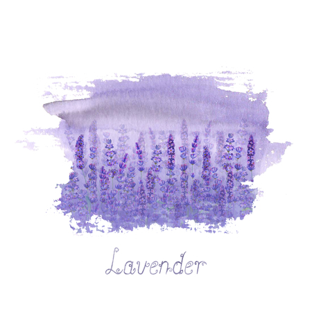 Lavender field pattern on purple stain isolated on white background. Watercolour hand drawn flowers. Watercolor botanical illustration with lettering. For invitation, wedding, greeting cards, textile.