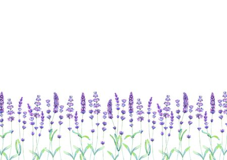 Lavender field pattern on white background. Watercolour hand drawn flowers, leaves, plants. Watercolor purple green botanical illustration. For invitation, wedding, greeting cards, textile design.