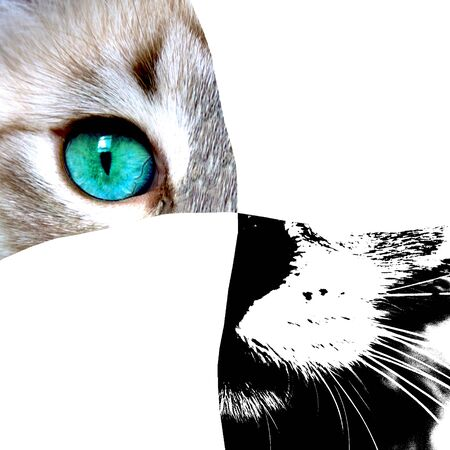Close up view of cat with green eyes. Cut cats portrait isolated on white background. Pets and lifestyle concept. Space for text. Close-up. Stock fotó