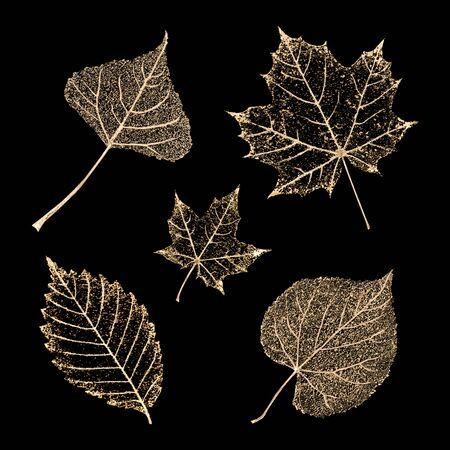 Set of transparent gold colored skeleton leaves on black background. Golden leaf of maple, birch, beech, linden. Luxury botanical illustration.