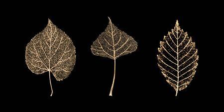 Set of three transparent gold colored skeleton leaves on black background. Golden leaf of birch, beech, linden. Luxury botanical illustration. Illusztráció