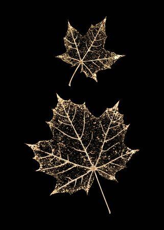 Set of two transparent gold colored skeleton leaves on black background. Golden maple leaves. Luxury botanical illustration.
