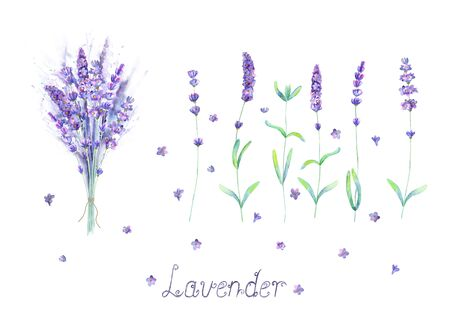 Lavender flowers, bouquet, lettering purple green watercolor set isolated on white background. Watercolour hand drawn botanical illustration. For invitation, wedding, greeting cards, textile design.