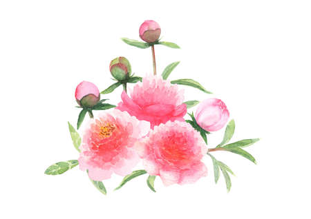 Watercolor pink peonies flowers and buds bouquet isolated on white background. Watercolor hand drawn floral spring botanical illustration. Print for textile, fabric, wallpaper, wrapping paper design.